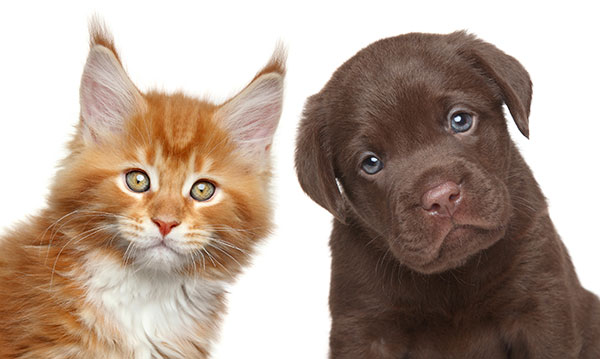 An orange cat and a brown puppy on a white background