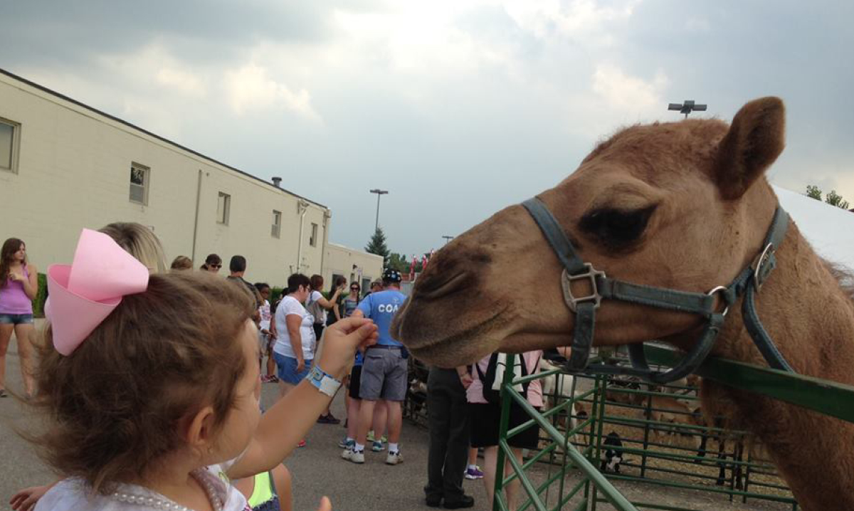 Girl pets camel at the Michigan State Fair