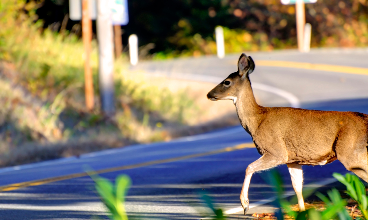 Dexter Bus Driver Runs Over Injured Deer in Front of Students