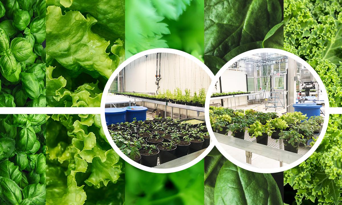 notre-dame-botany-program-new-greenhouse