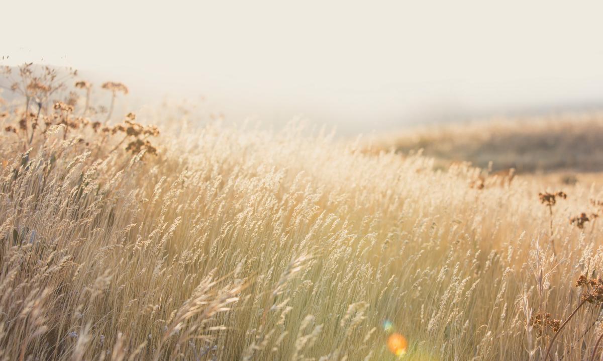 The sun shines on a prairie