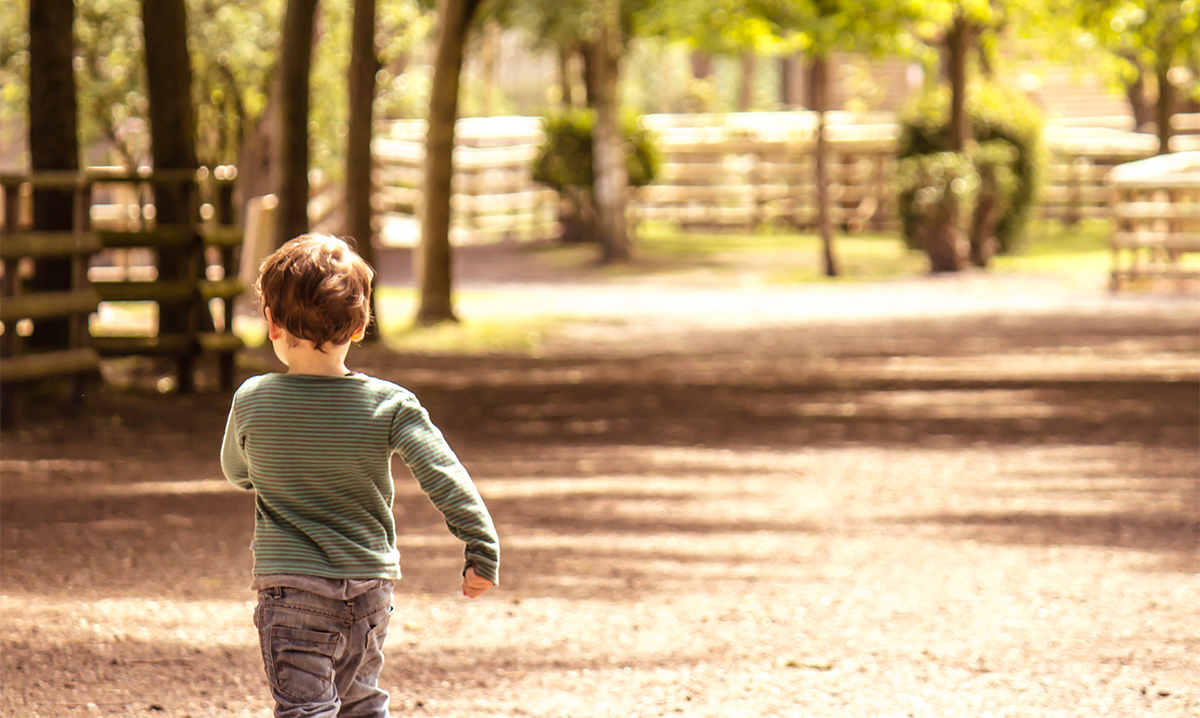 A young boy walking away from the camera on a sunny path surrounded by trees.