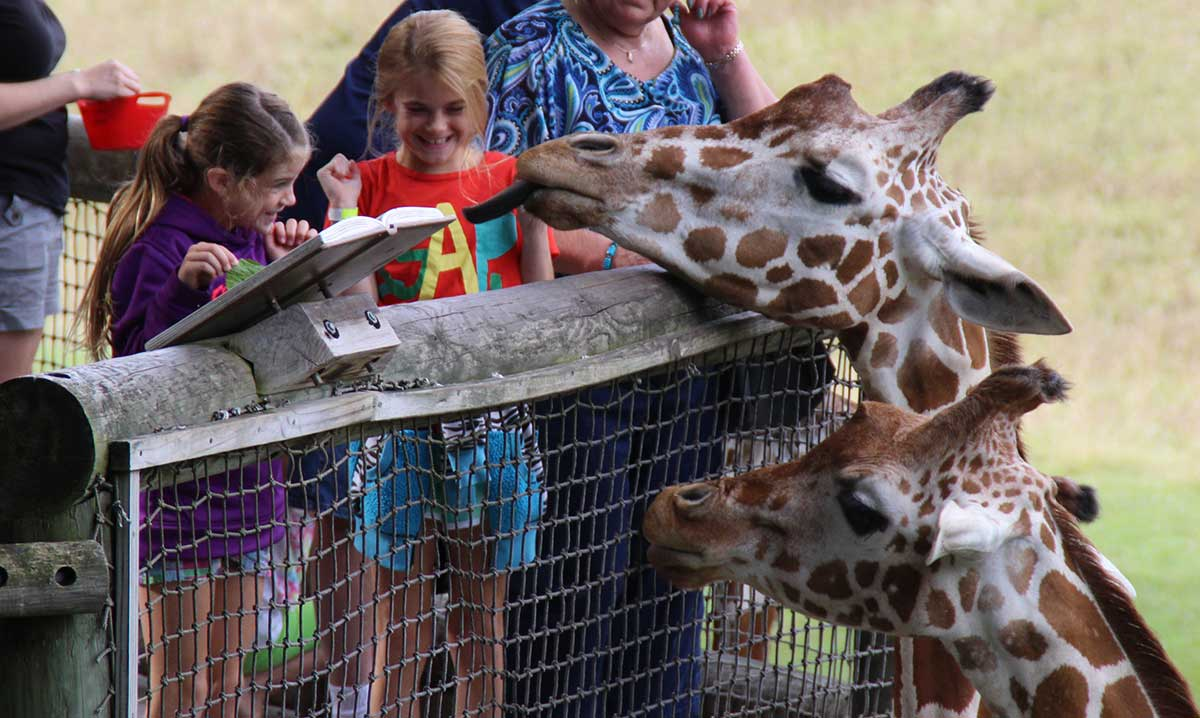Kids feeding giraffes at the Binder Park Zoo