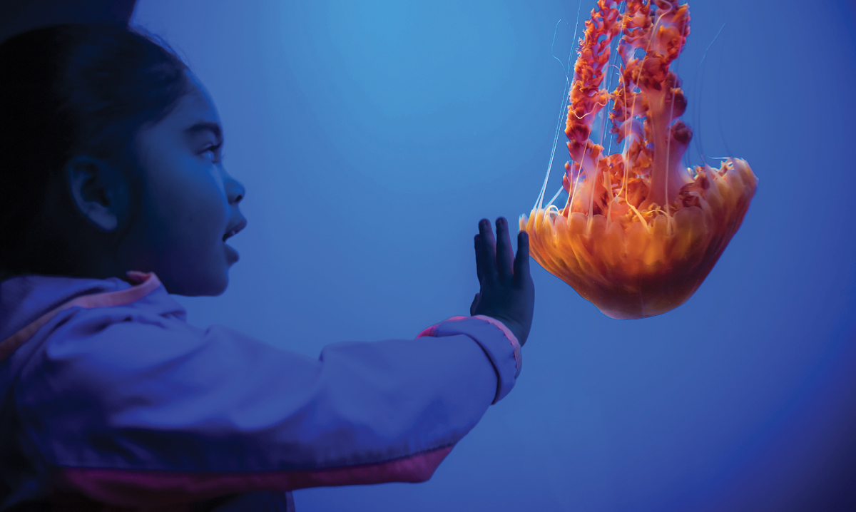 Child reaching out to red jellyfish