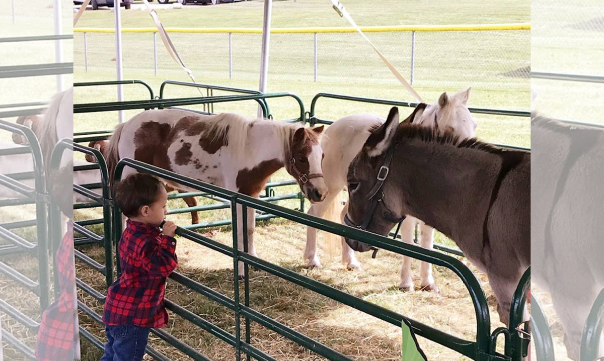 Little boy looks at ponies at the Davisburg Heritage Festival