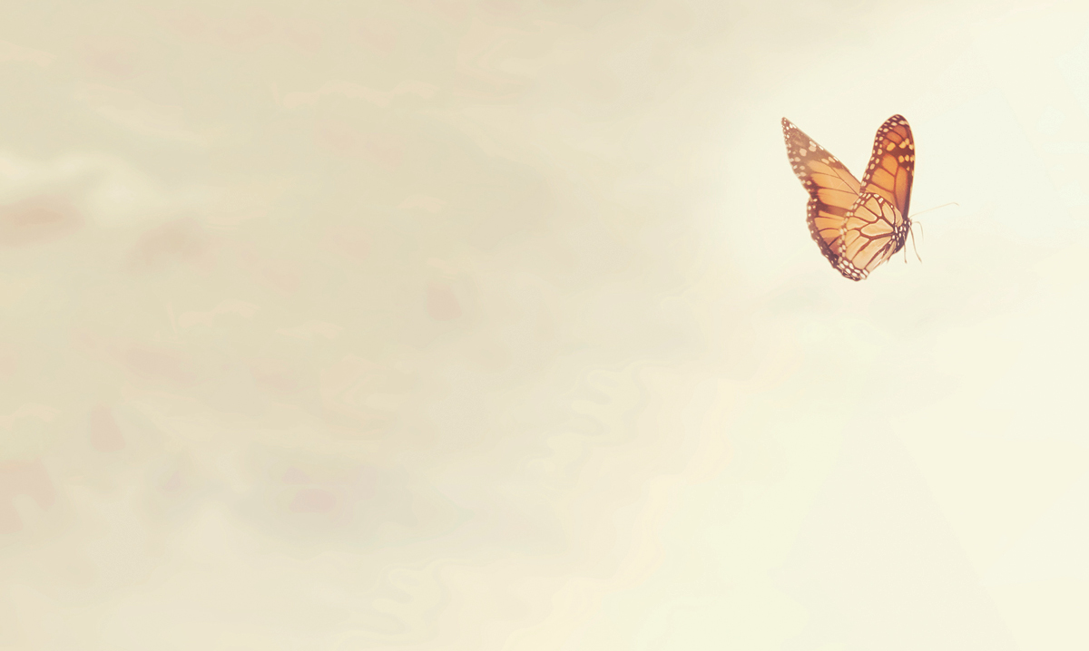 An orange butterfly flying on a beige background