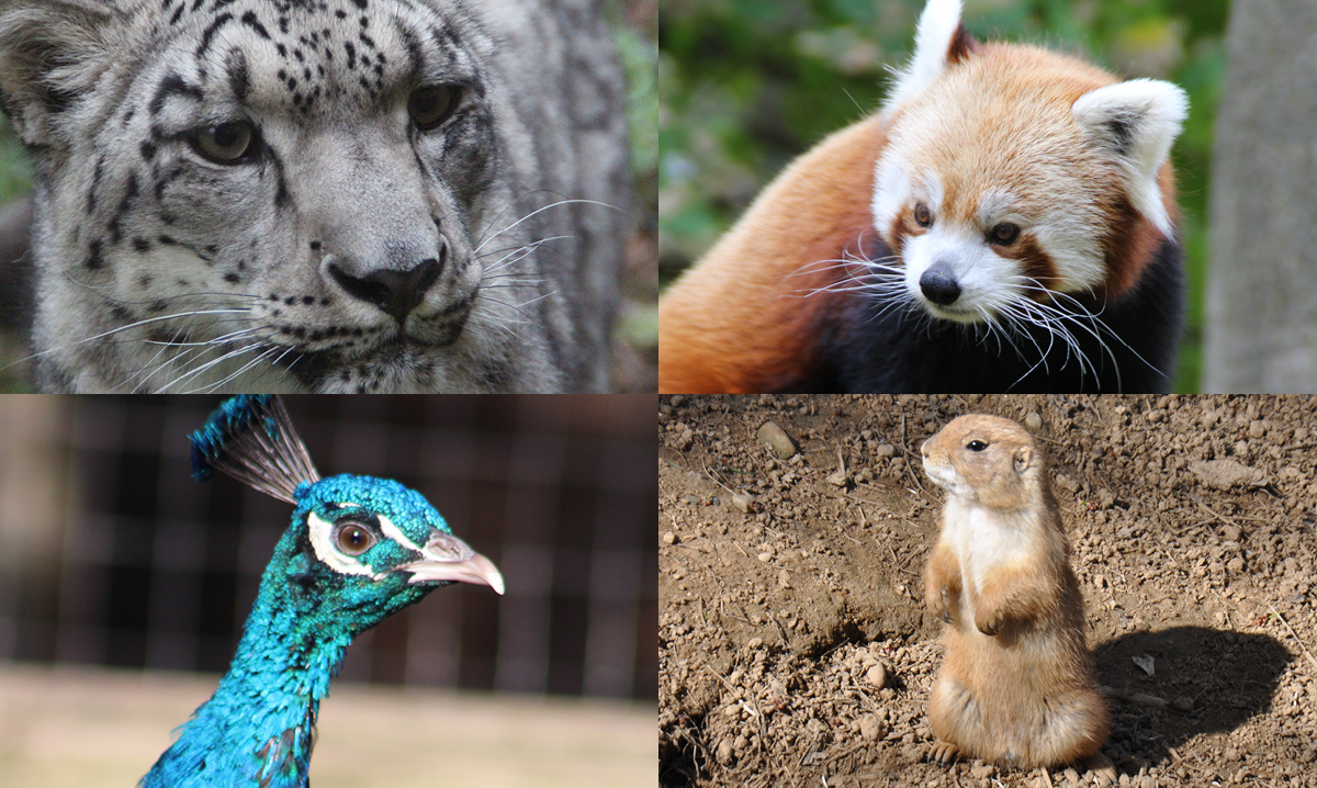 Four photos of animals at the binder park zoo in a grid