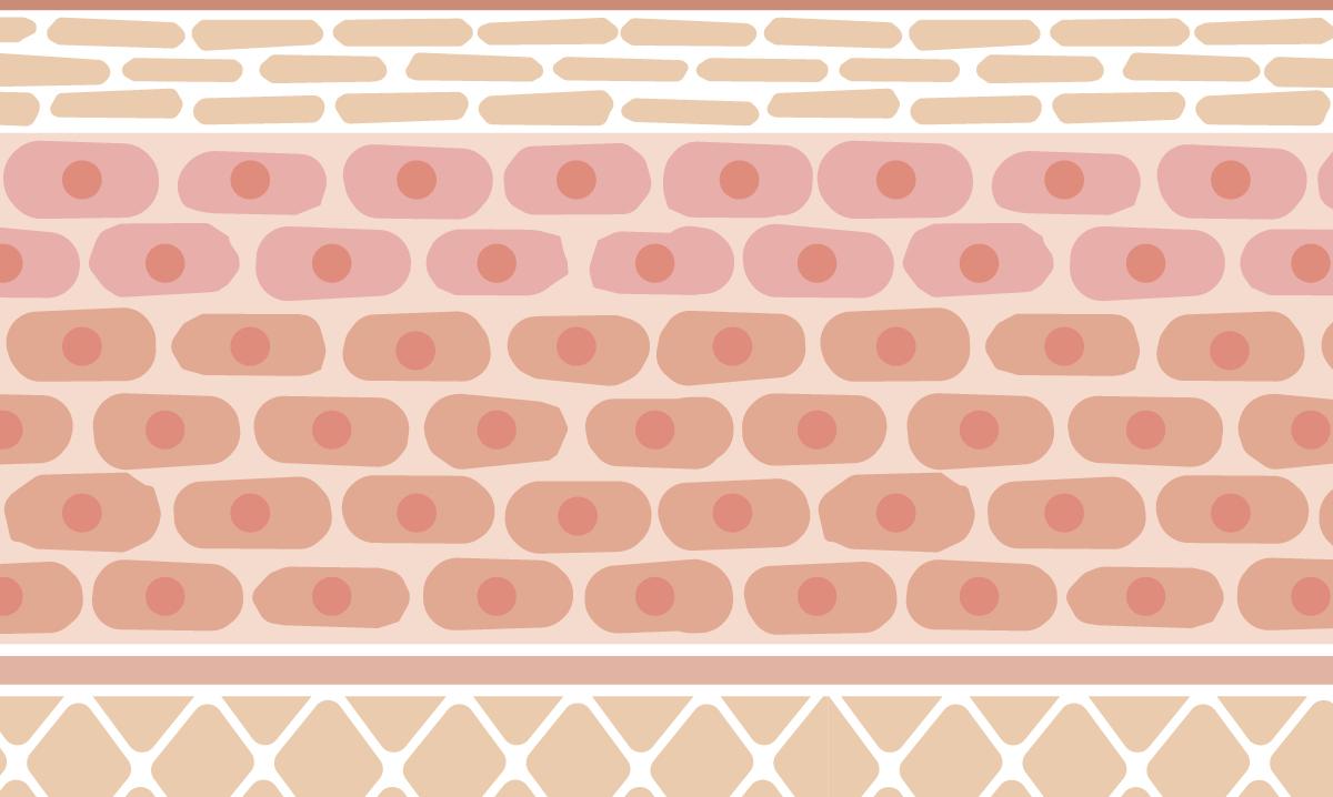 Illustration of pink skin cells