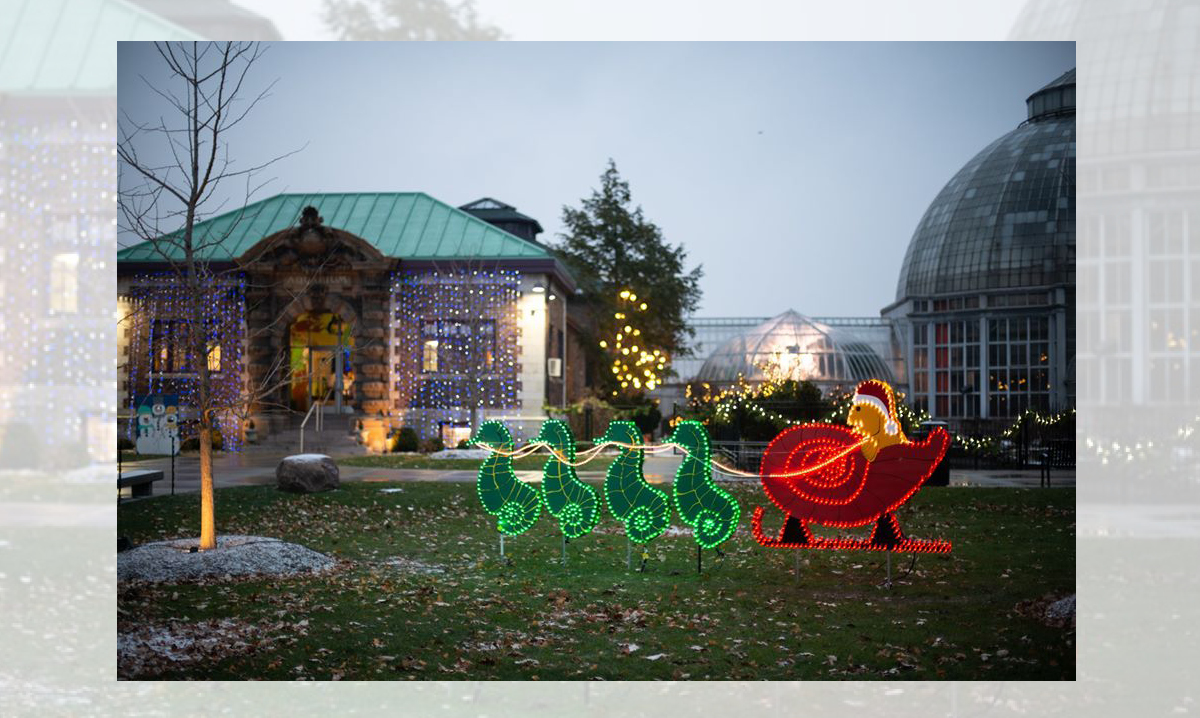 A light display at the Belle Isle Holiday Stroll
