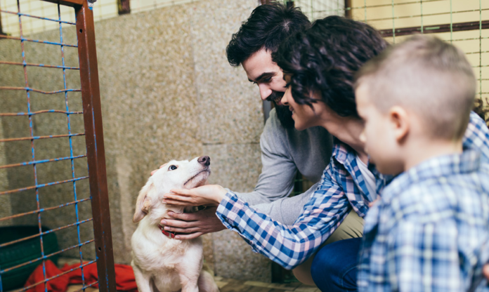 Family petting a dog at an animal shelter
