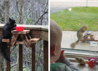 A collage of squirrels using the feeder talbles