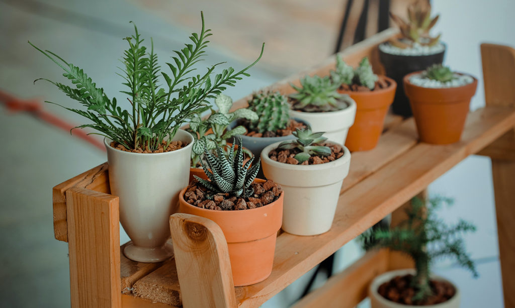 A variety of houseplants on a wooden shelf