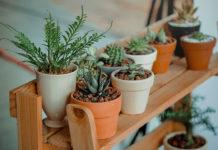 A variety of houseplants on a wooden shelf