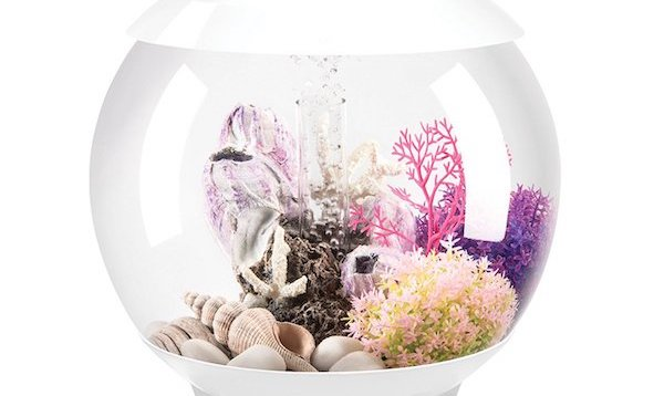 Biorb aquarium on a white background