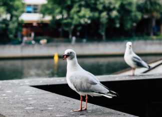 Closeup of a seagull sitting on a fountain