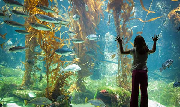A little girl looks into an aquarium