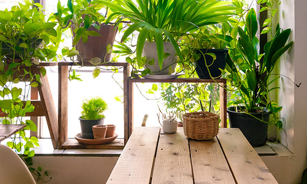 Potted plants on a table in a window
