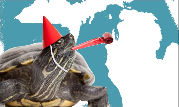 Painted turtle in a party hat celebrating Michigan's birthday