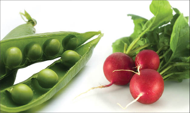 Three peas and a bundle of radishes on a white surface