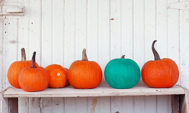 teal pumpkin project raises food allergy awareness on halloween