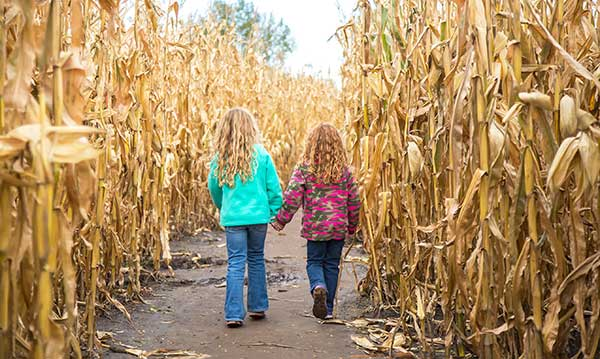 Two girls walking hand-in-hand in a corn maze