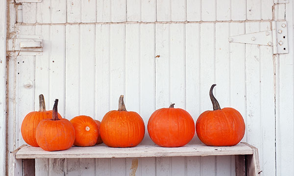 Six pumpkins on a bench on a white background