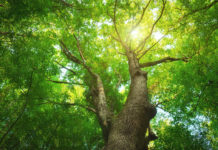 trees-help-sixth-graders-do-better-in-school