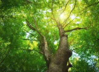 trees-help-sixth-graders-do-better-in-school