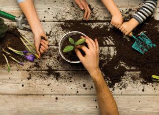 three-plants-kids-can-grow